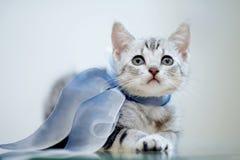 Stående av en grå randig kattunge med en pilbåge arkivfoto
