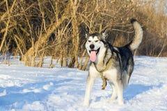 Stående av en gullig fluffig hund på naturen i en ljus solig dag royaltyfria bilder