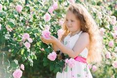 Stående av en gullig litet barnflicka som är utomhus- i en rosträdgård som luktar blommorna Royaltyfria Foton