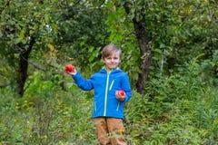 St?ende av en gullig pojke i en hatt i tr?dg?rden med ett r?tt ?pple, sinnesr?relser, lycka, mat H?stsk?rd av ?pplen royaltyfri foto