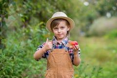St?ende av en gullig pojke i en hatt i tr?dg?rden med ett r?tt ?pple, sinnesr?relser, lycka, mat H?stsk?rd av ?pplen royaltyfri fotografi