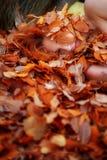 Stående av en gullig ung älskvärd flicka som täckas med röda och orange höstliga sidor Härlig sexig flicka som ligger på höstsido arkivfoton