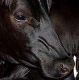 Stående av en häst Arkivfoto
