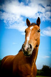 Stående av en häst med blåa himlar och trädet Arkivbild