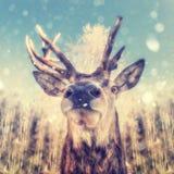 Stående av en hjort Arkivbild