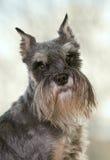 Stående av en hund Arkivbild