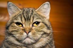 Stående av en inhemsk katt royaltyfria foton