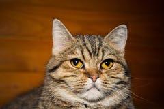 Stående av en inhemsk katt arkivbilder