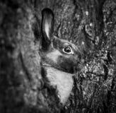 Stående av en kanin Arkivfoton