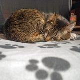 Stående av en katt royaltyfri foto