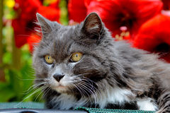 Stående av en katt Arkivbild