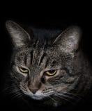 Stående av en katt fotografering för bildbyråer