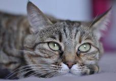 Stående av en katt Arkivbilder