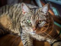 Stående av en katt Arkivfoton