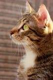 Stående av en katt med gula ögon arkivfoto