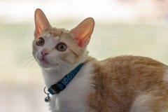 Stående av en katt mot suddig bakgrund Arkivbild