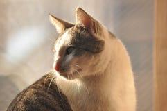Stående av en katt Wild synar Arkivfoton