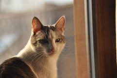 Stående av en katt Wild synar Fotografering för Bildbyråer