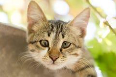Stående av en kattunge i natur Arkivfoton