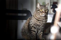 Stående av en kvinnlig strimmig kattkatt arkivbilder