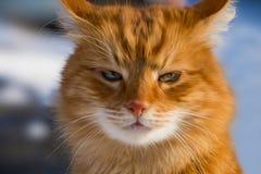 Stående av en ljust rödbrun katt stock illustrationer