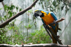 Stående av en papegoja i en zoo i New York City Arkivbild