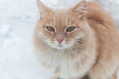 Stående av en röd fryst gatakatt Katt i snön mot bakgrunden av snöflingor Begreppet av problemet av Arkivbilder