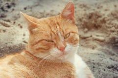 Stående av en röd katt som blinkar från solen Arkivbilder