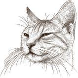 Stående av en slug katt royaltyfri illustrationer