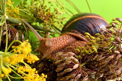 Stående av en snigel på en bakgrund av växter Arkivbilder