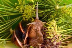 Stående av en snigel på en bakgrund av växter Arkivbild