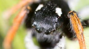 Stående av en spindel i natur supermakrosommar för 2009 blomma Arkivbilder