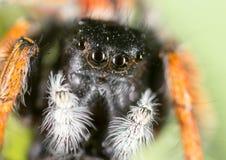 Stående av en spindel i natur supermakrosommar för 2009 blomma Royaltyfria Bilder