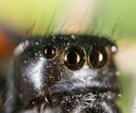 Stående av en spindel i natur supermakrosommar för 2009 blomma Fotografering för Bildbyråer