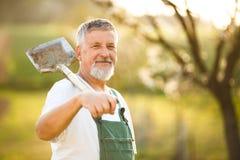 Stående av en stilig hög man som arbeta i trädgården i hans trädgård royaltyfri fotografi