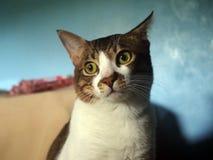 Stående av en stirrig katt arkivfoton