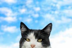 Stående av en svartvit katt och himmel Royaltyfria Foton