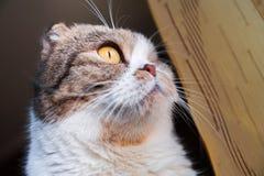 Stående av ett härligt husdjur Royaltyfria Bilder