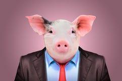 Stående av ett svin i en affärsdräkt royaltyfri bild