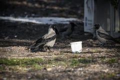 Stående av galanden som äter i zoo Arkivfoto