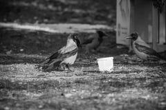 Stående av galanden som äter i zoo Arkivbild