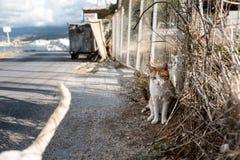 Stående av gatakatter i Kreta Grekland arkivfoto