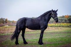 Stående av hästar Arkivfoton