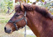 Stående av hästen Fotografering för Bildbyråer