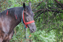 Stående av hästen Royaltyfria Foton