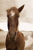 Stående av hästen Royaltyfria Bilder