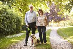 Stående av höga par som går den älsklings- bulldoggen i bygd royaltyfri foto