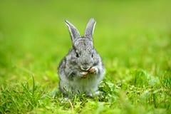 Stående av Hare Arkivbild