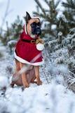 Stående av hunden i jultomtendräkt mot bakgrund av julgranar Arkivfoto