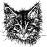 Stående av katten Arkivbilder